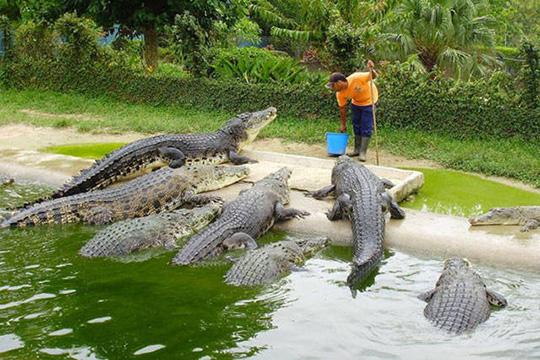Big Fish Game Tropical Island With Monkey